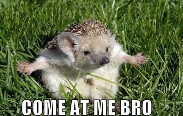 come at me bro -  hedgedog