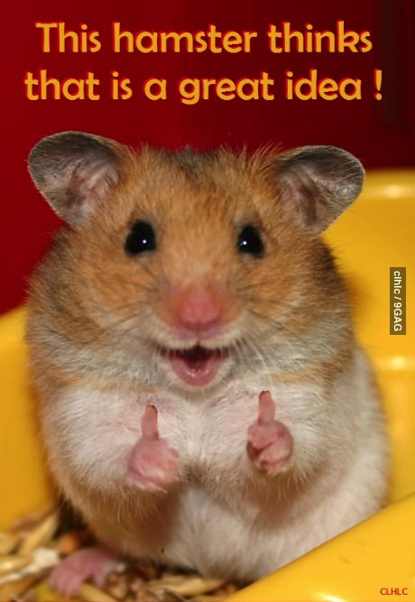 hamster thinks it is a great idea